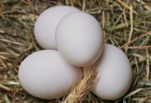 Egg, White